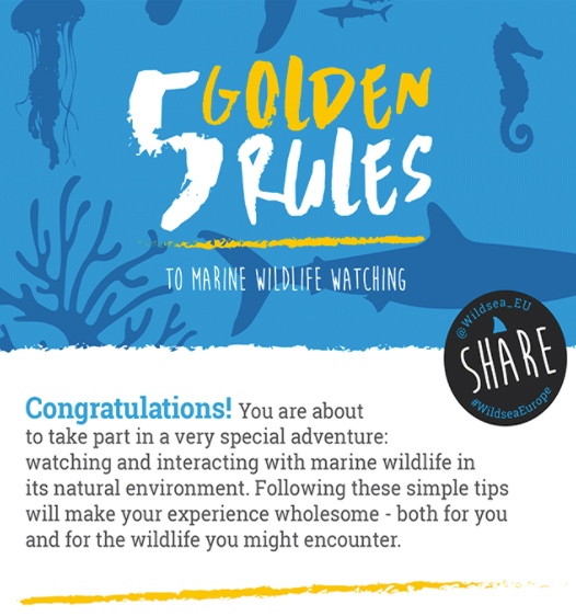 5 Golden Rules to Marine Wildlife Watching