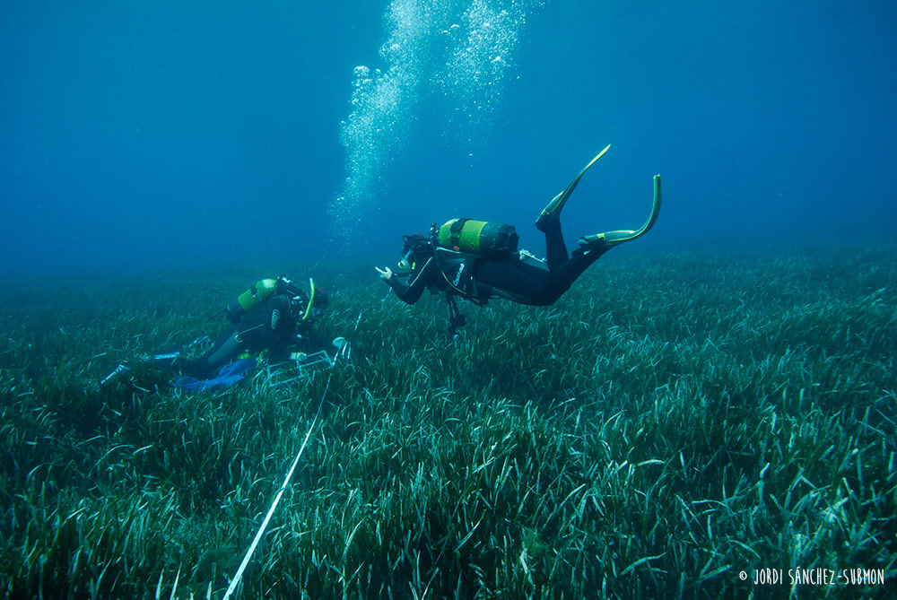 Posidonia and divers - Posidonia oceanica