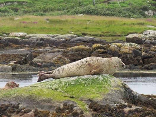 Seal Watching Trip | Dive Arranmore Charters
