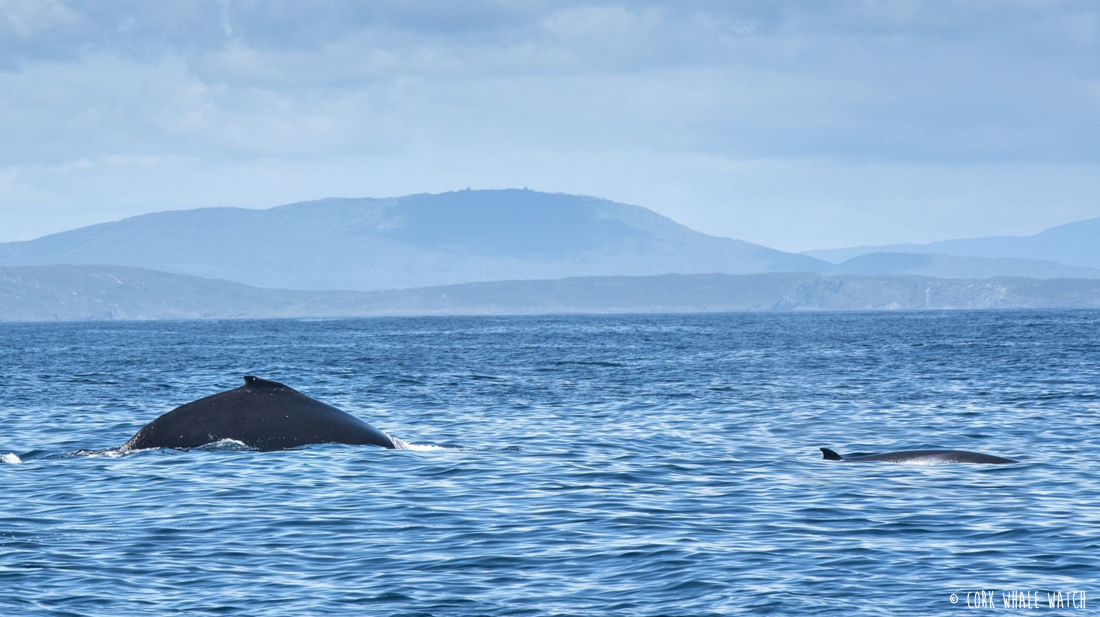 County Cork | Cork Whale Watch