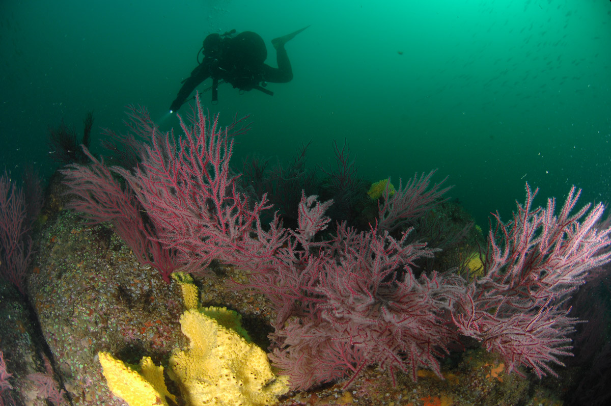 Diving around Ons Island in Galicia