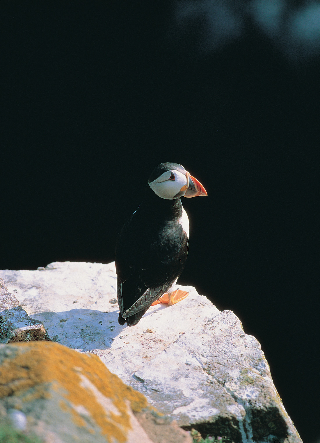 Ballycastle Charters | Puffin Tour at Rathlin Island