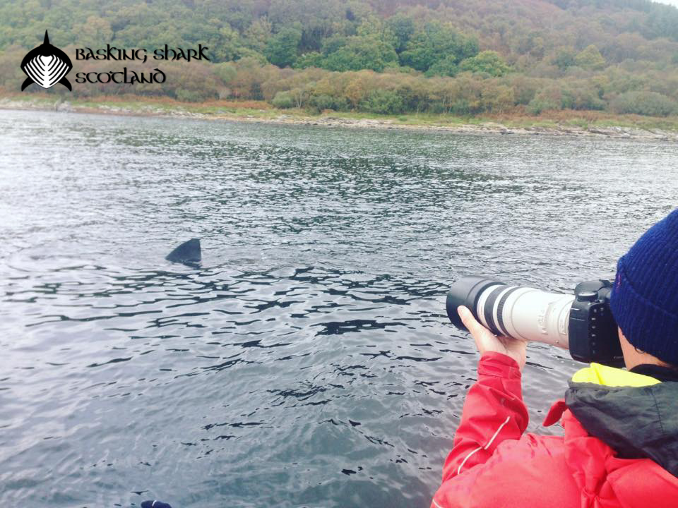 Basking Shark Scotland | Basking Shark Research Expeditions (Scotland, UK)
