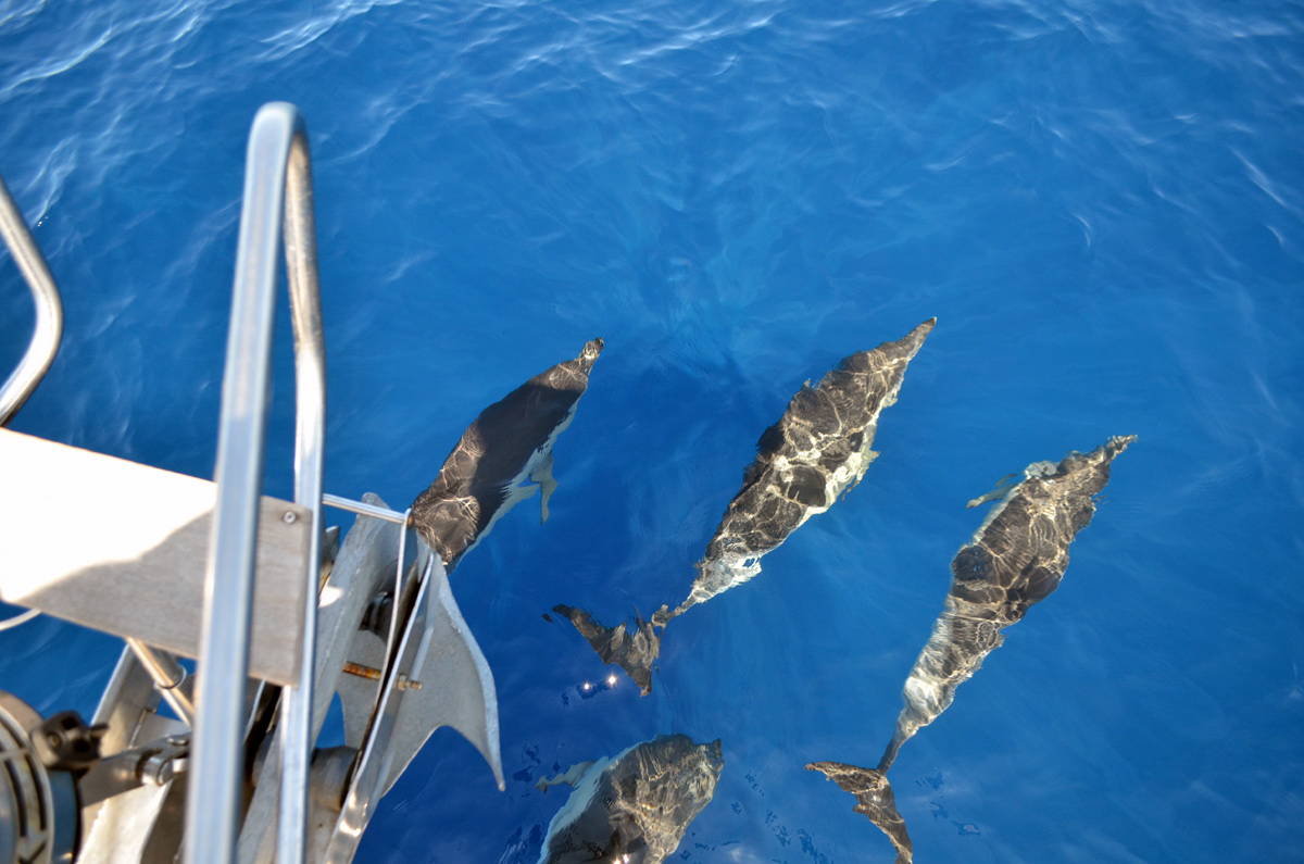Whale & Dolphin Watching Tour in Tenerife (Canary Islands, Spain)