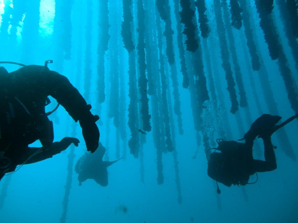 Divers visit a mussel farm in Galicia