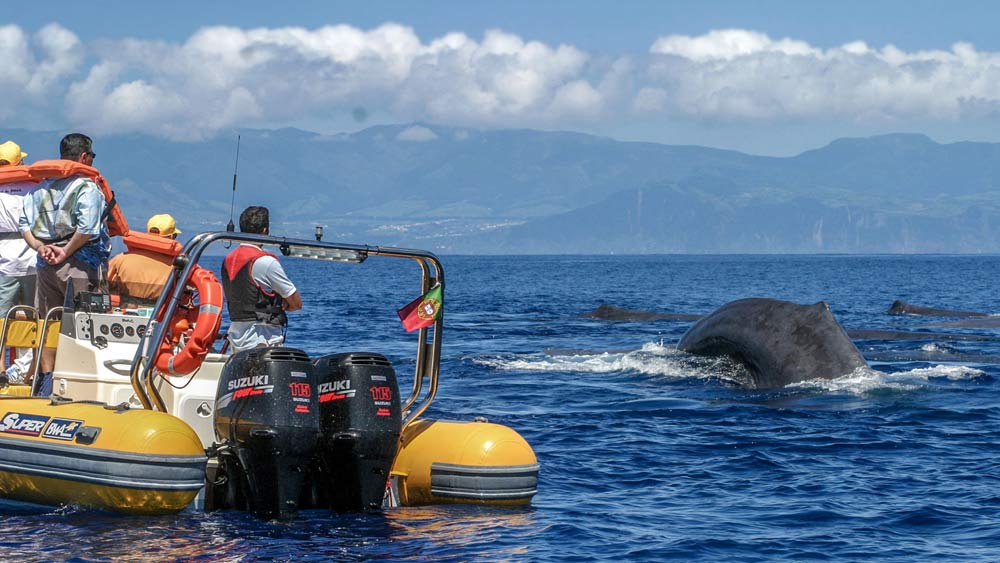 Whale Watching in Azores (c) Terra Azul