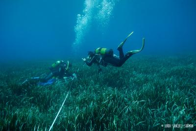 Posidonia and divers -&nbsp;<em>Posidonia oceanica</em>