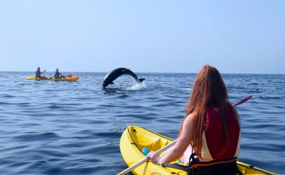 Kayaking with Dolphins & Snorkelling with Turtles (Tenerife, Canary Islands)