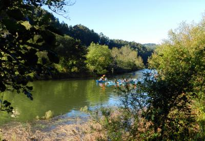 Following the Elver's Trail (Basque Country, Spain)