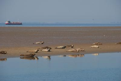 Half-day Seal & Bird Watching Tour in the Waddensea (Amsterdam, The Netherlands)