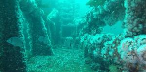 Aries Wreck Dive in Ria de Arousa
