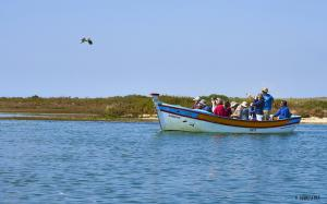 Nature Boat Tour of Ria Formosa